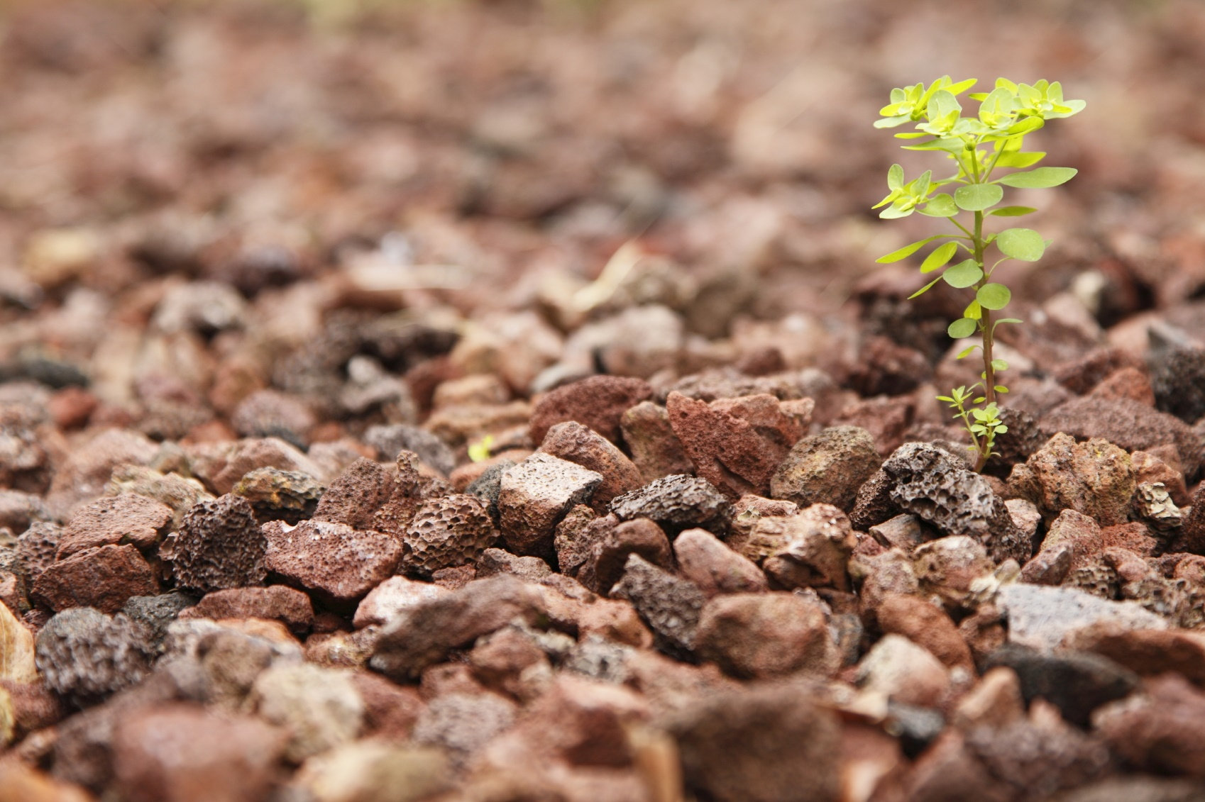 plant-growing-from-rock-iStock