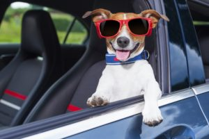 dog-with-glasses-fun
