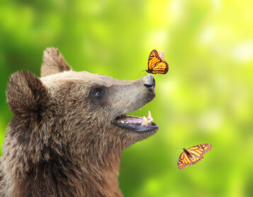 A Bear Meets a Butterfly in Heaven